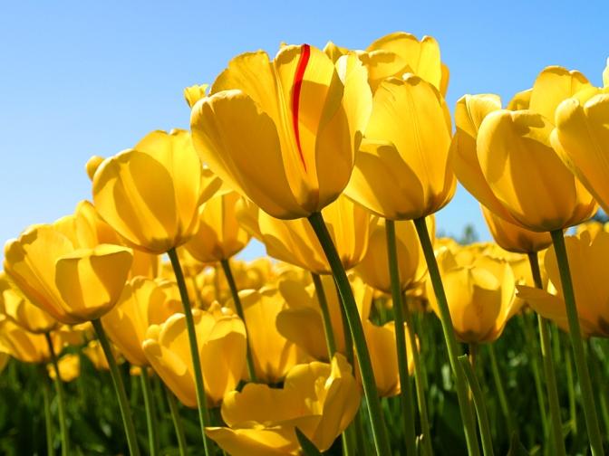 Outdoors: 5 Spring Activities